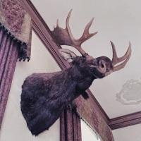 Casa Loma Moose